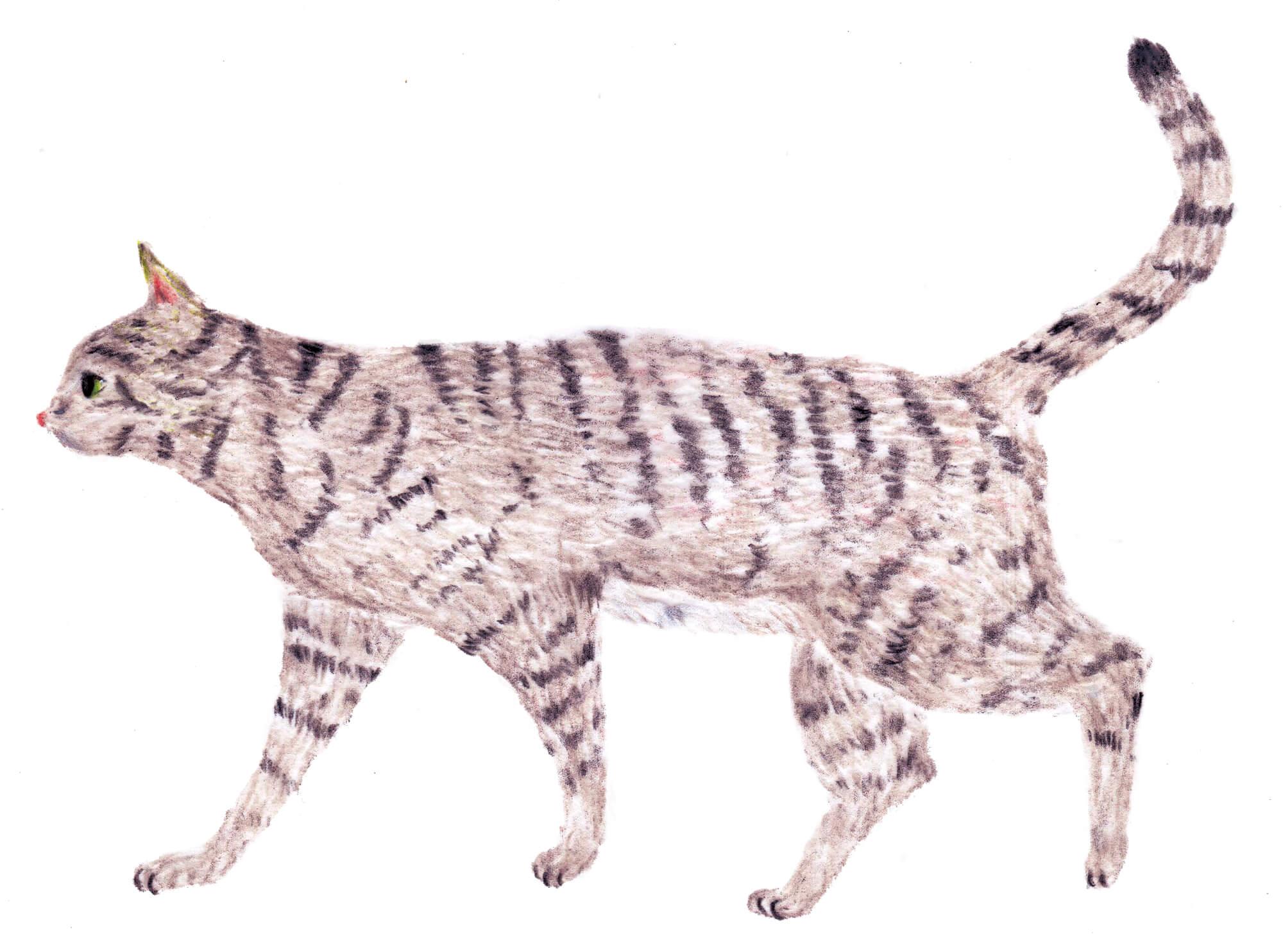 「ねこのきもち」イラストカット ベネッセ 2020年6月号「ご機嫌猫」
