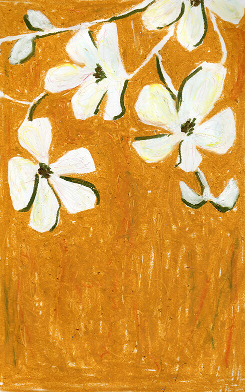 冬の花2(白い花)20140221